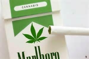 Carton Of Marlboro Lights by Marlboro Marijuana Cigarettes Are They Real