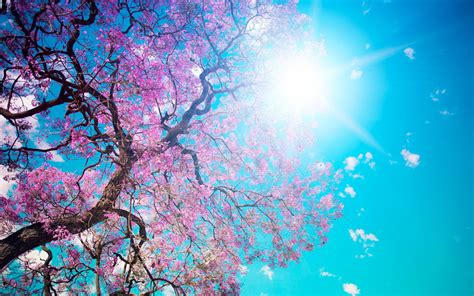 pink nature wallpaper hd bloom beauty pink tree nature hd wallpapers new hd