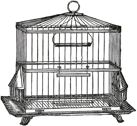 Bird On A Wire In A Cage Its All The Same by Vintage Wire Bird Cage Image The Graphics