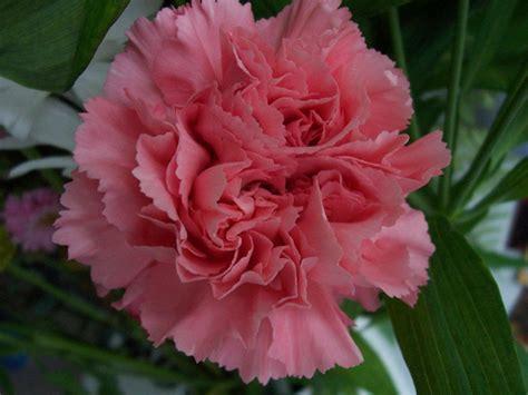 fiori recisi nomi nomi e immagini di fiori di primavera 35 foto