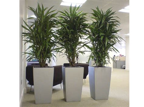 best plants for the office plant gallery office plants atlanta alpha plant care