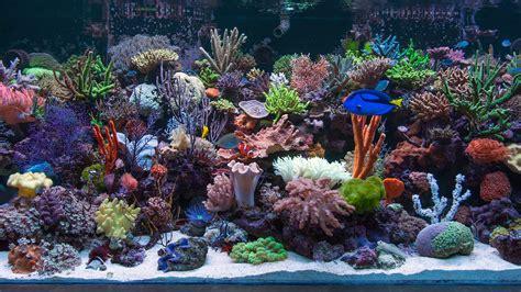 marine aquarium google search artistic aquarium