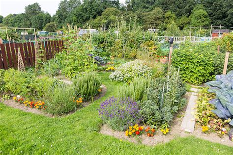 how to start an organic garden in your backyard how to start your own organic garden primal power method