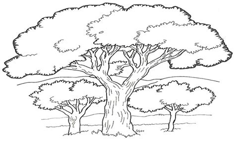 jungle tree coloring page jungle trees coloring pages printable coloring pages