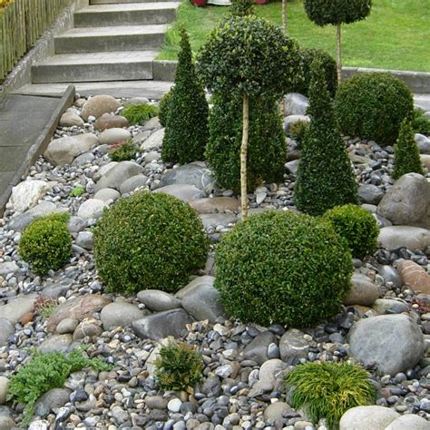 Steingarten Bepflanzen