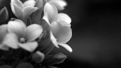 imagenes de uñas blanco con negro fondos de flores tribales blanco y negro imagui