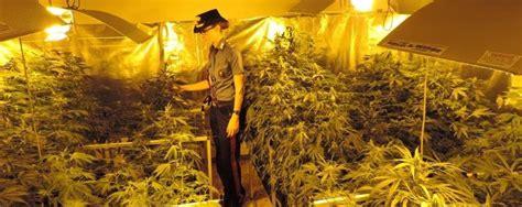coltivare marijuana in casa senza lade piantagione di marijuana in casa blitz dei carabinieri un