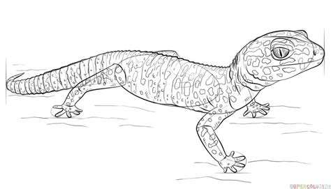 image gallery leopard gecko drawing