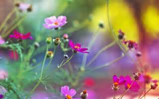 Hd Images Of Flowers Amazing Flowers Wallpapers Hd Wallpapers