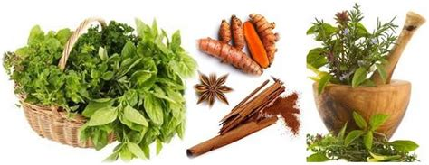 is rosemary safe for dogs herbs spices for dogs cats bad for dogs cats uses dosage ottawa