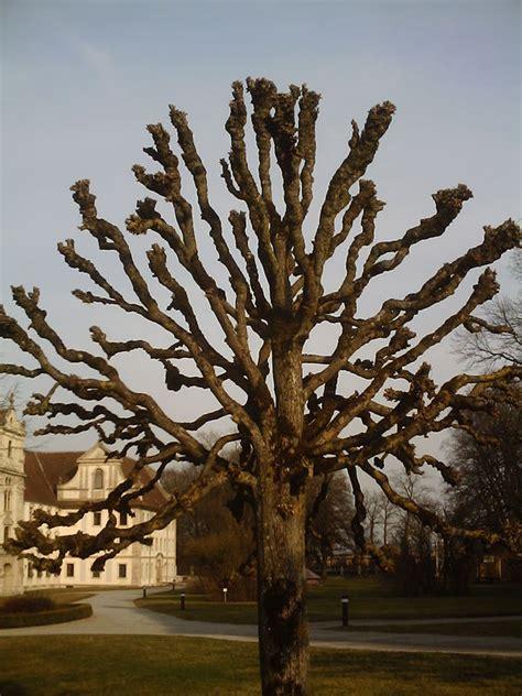 Was Kostet Ein Baum 4662 by Au 223 Ergew 246 Hnlicher Baum Foto Bild Stillleben Motive