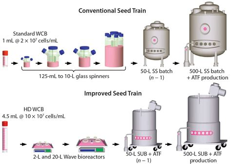 bioreactor cell culture protocol a novel seed process using high density cell