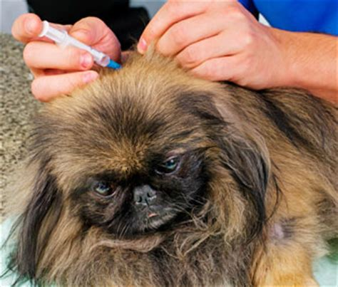 bordetella for dogs vaccine for bordetella in dogs and cats