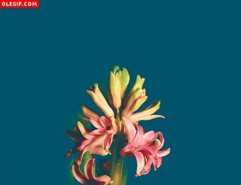 imagenes flores gif gif flores en movimiento gif 311