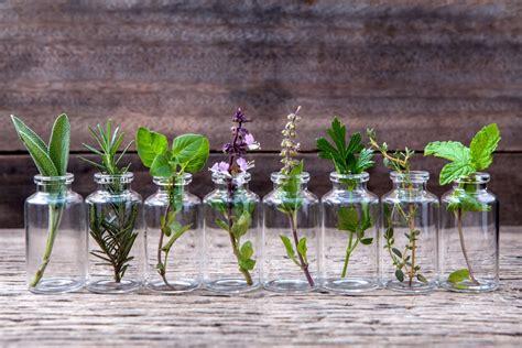 herbs vegetables plants   grow  water