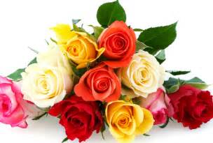roses colors the meaning of every color s day flowers
