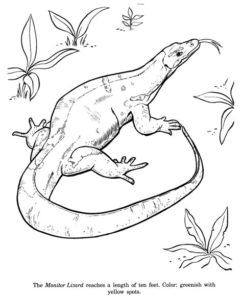 Water Monitor Coloring Page | asian water monitor coloring download asian water monitor