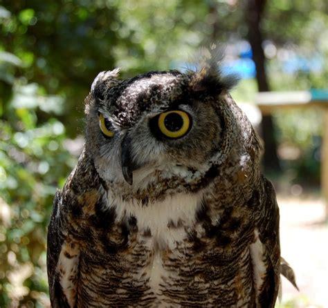 lindsay wildlife museum walnut creek cityseeker