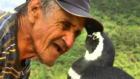 strong opinions the penguin 0141197196 amazing story of dindim the penguin who swims 5 000 miles to see his human soulmate every year