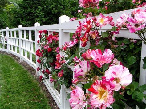 Flower Garden Fence Flower Fence Fence Flowers Nature Pink Roses White 174305