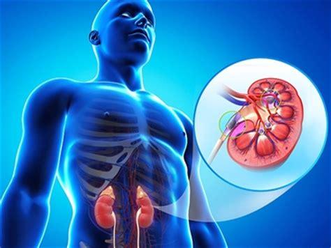 alimenti per calcoli renali dieta calcoli renali diete e malattie quale dieta per
