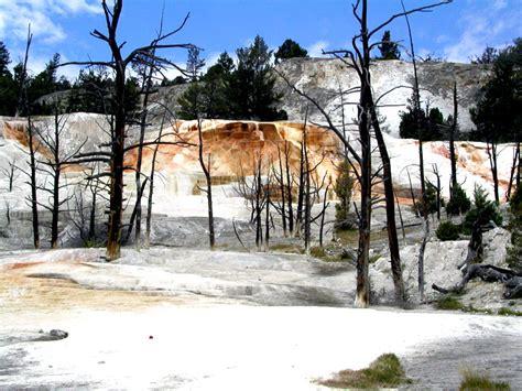 Yellowstone Brigade american fur trade