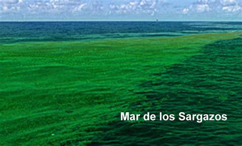 el mar de los opiniones de mar de los sargazos