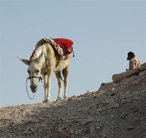 egli figuren kamel kleintiere
