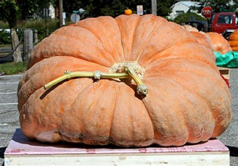 World S Largest Pumpkin To Be Carved At The New York Largest Botanical Garden In World