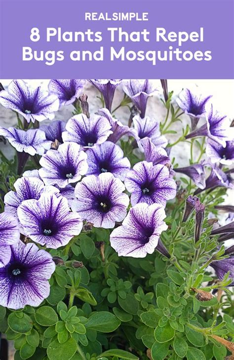 plants that repel aphids gardens creative and plants that repel bugs on