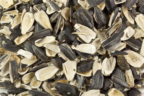 empty shells of sunflower seeds royalty free stock image