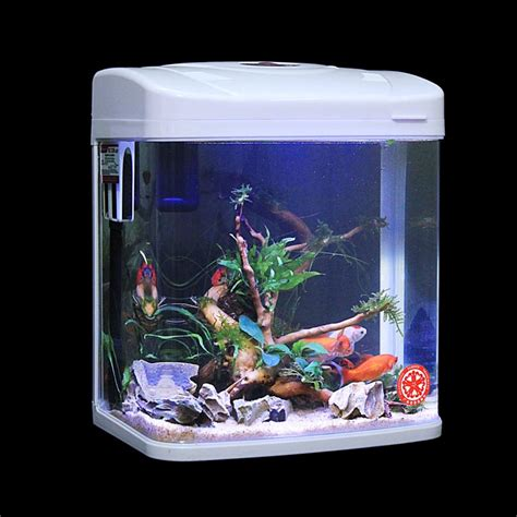 design vis aquarium small aquarium fish www imgkid com the image kid has it