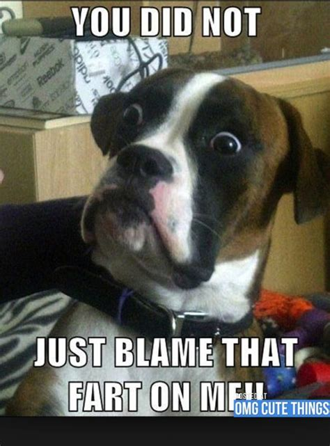 Annoyed Dog Meme - 1000 images about the difference between dogs and cats on