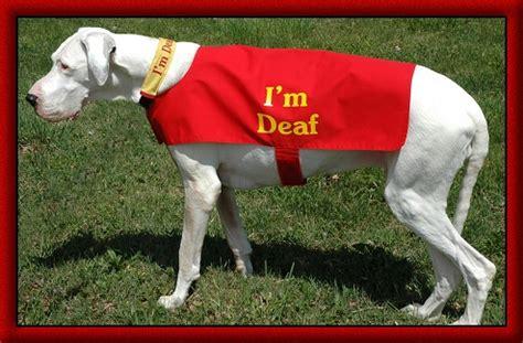 deaf dogs a deaf thedogtrainingsecret