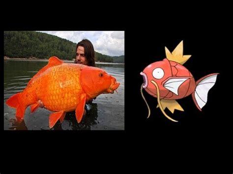 imagenes de pokemon xy reales los peces que inspiraron a pokemon pokemones reales