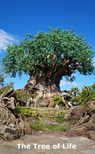 themes in animal kingdom film top 10 best attractions at disney s animal kingdom park