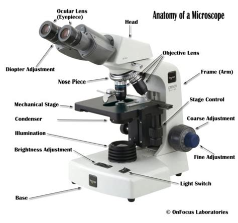 compound microscope diagram parts of a compound microscope with diagram and functions