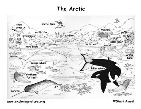 coloring pages of animals in their habitats arctic and the tundra
