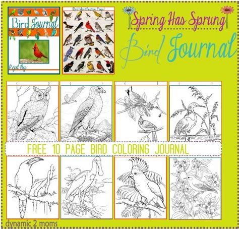printable bird journal 17 best images about coloring pages on pinterest mandala