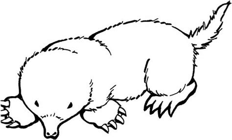 broad footed mole coloring pages batch coloring