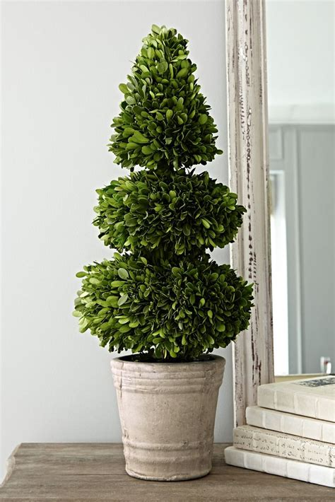 how to make a boxwood topiary 17 best ideas about boxwood topiary on formal