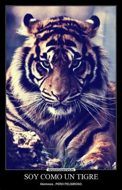 imagenes tumblr de tigres soy como un tigre desmotivaciones