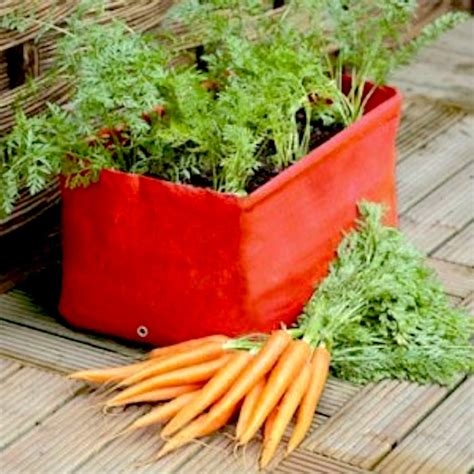 Pot Vegetable Gardening For Beginners May 2015 Container Gardening