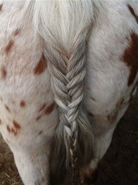 cute hairstyles for horses pinterest discover and save creative ideas
