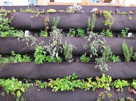 herb garden wall information about diy herb walls tips on making vertical