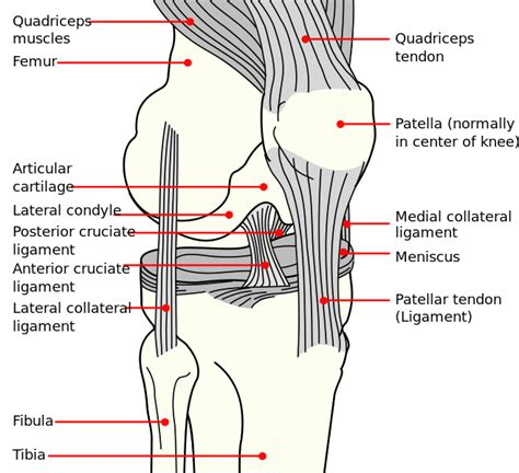 parts of knee diagram the most common knee injuries