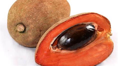 imagenes zapote negro image gallery zapote fruta