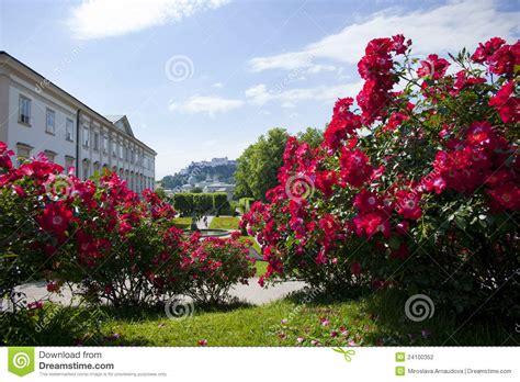 imagenes de jardines de rosas rojas rosas rojas en los jardines de mirabell fotograf 237 a de
