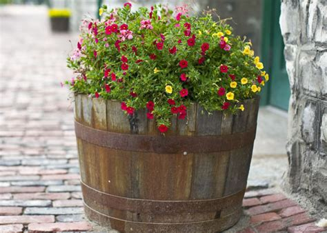 plant a garden barrel for your zone garden club