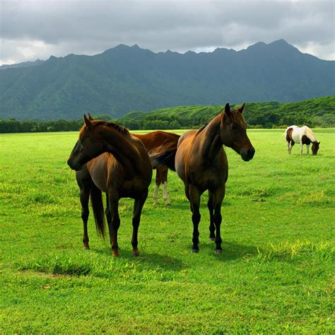wallpaper horse free download free download wallpaper horses